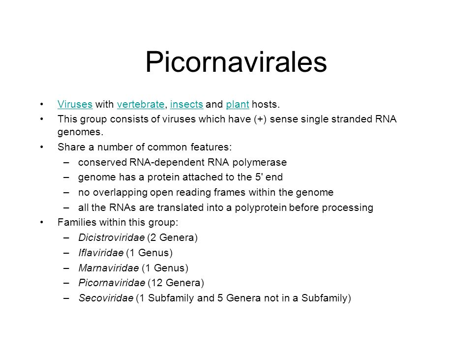 Picornavirales Viruses with vertebrate, insects and plant hosts.