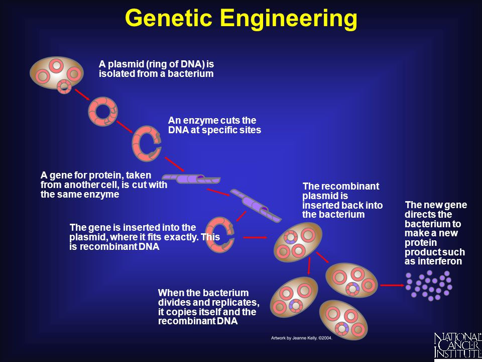 an understanding of genetic engineering Targeting capital: a cultural economy approach to understanding the efficacy of two anti–genetic engineering movements 1.