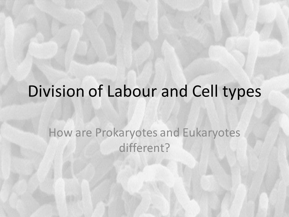 Division of Labour and Cell types