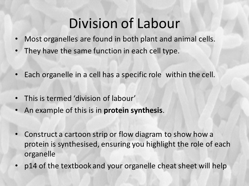 division of labour Cells show very neat division of labour, each cell has various organelles which have their own function to performsome of the organelles generally present in a cell are: mitochondria synthesise the energy currency(atp), other organelles use this.