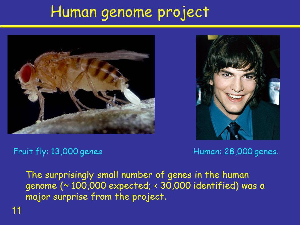 the main characteristics of the human genome project Prohibit the use of pgd for selecting for non-disease characteristics such as height, weight, intelligence, personality traits, behavior, or gender mandatory screening carries many ethical concerns  human genome project.