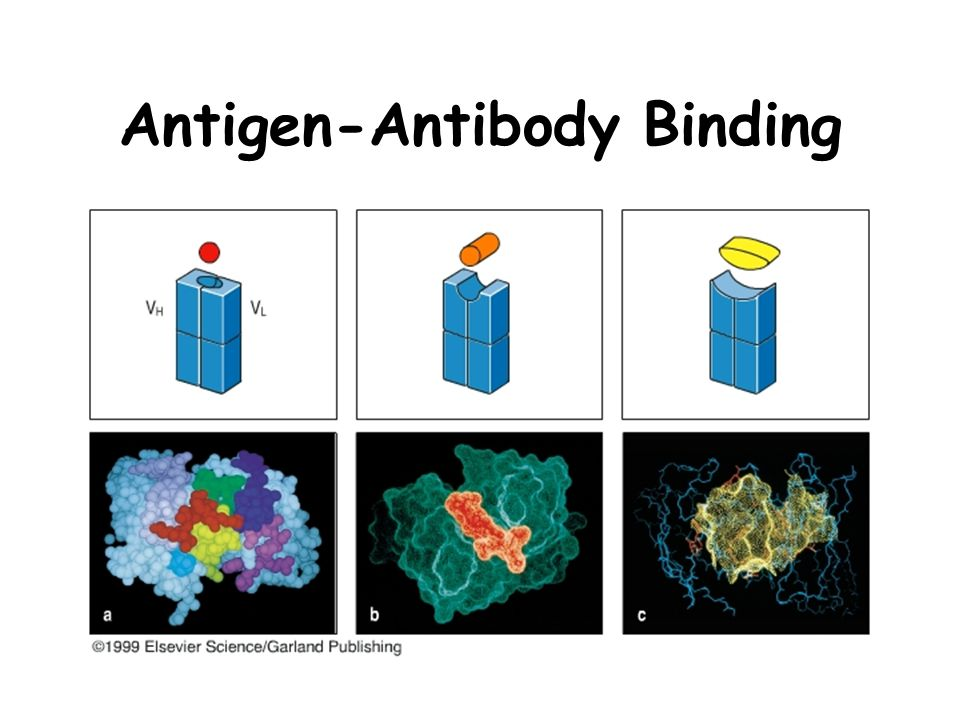 An IgM antibody targeting the receptor binding site of ...