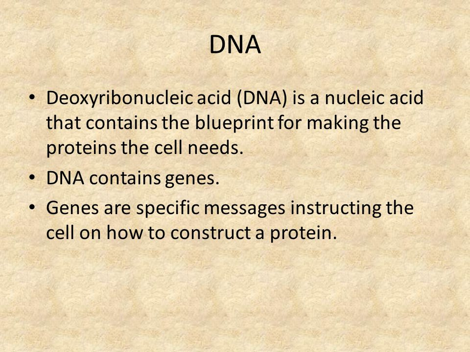 Dna rna chapter ppt video online download 2 dna deoxyribonucleic malvernweather Choice Image