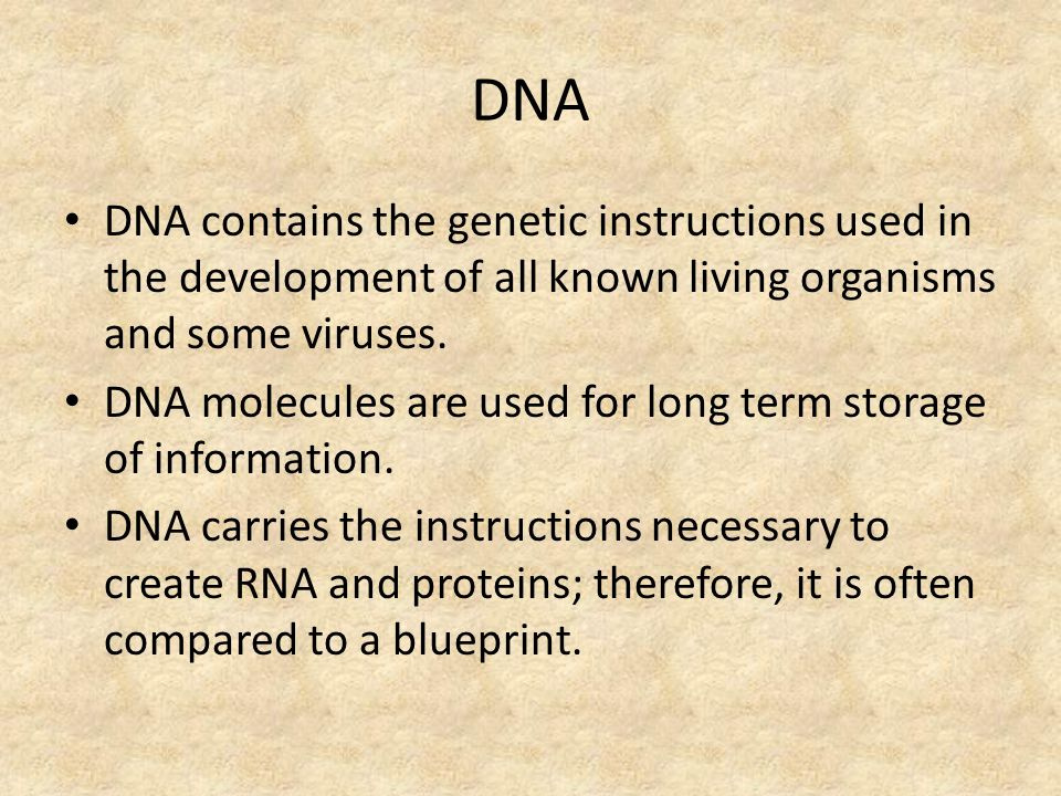 Dna rna chapter ppt video online download 4 dna malvernweather Choice Image