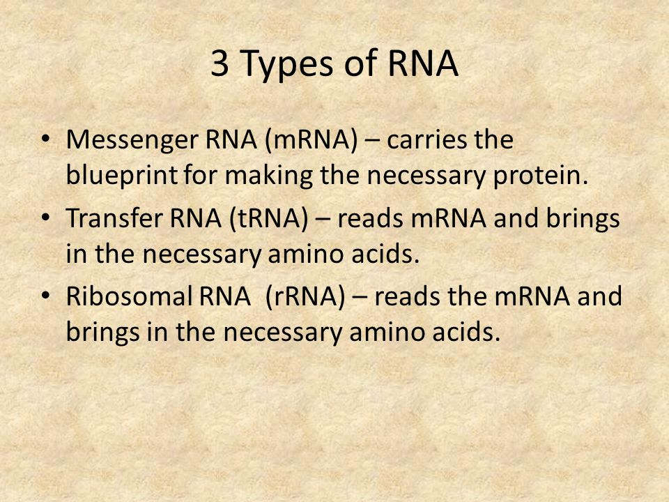 Dna rna chapter ppt video online download 3 types of rna messenger rna mrna carries the blueprint for making the malvernweather Choice Image