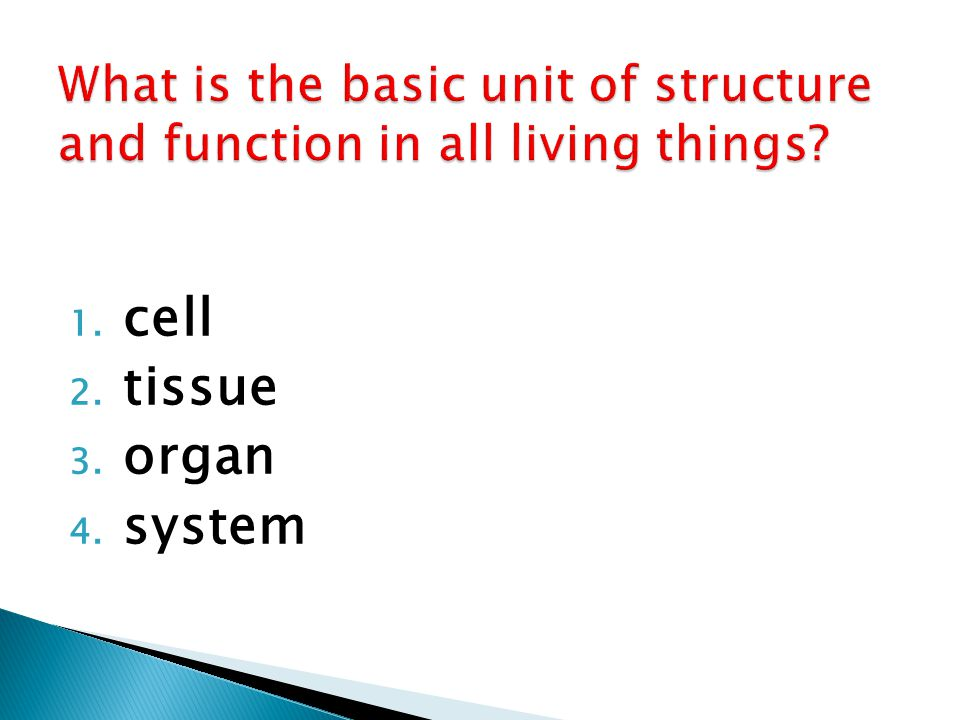 how do organelles impacts a cell s activity ppt