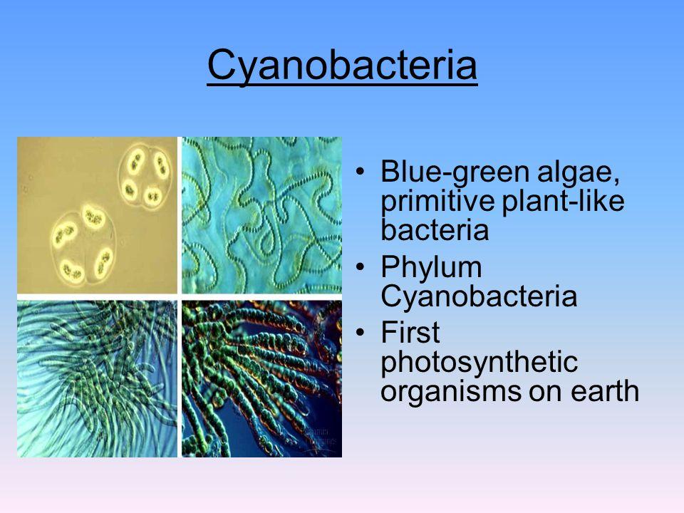 Chapter 5 Marine Prokaryotes, Protists, Fungi and Plants ... | 960 x 720 jpeg 101kB