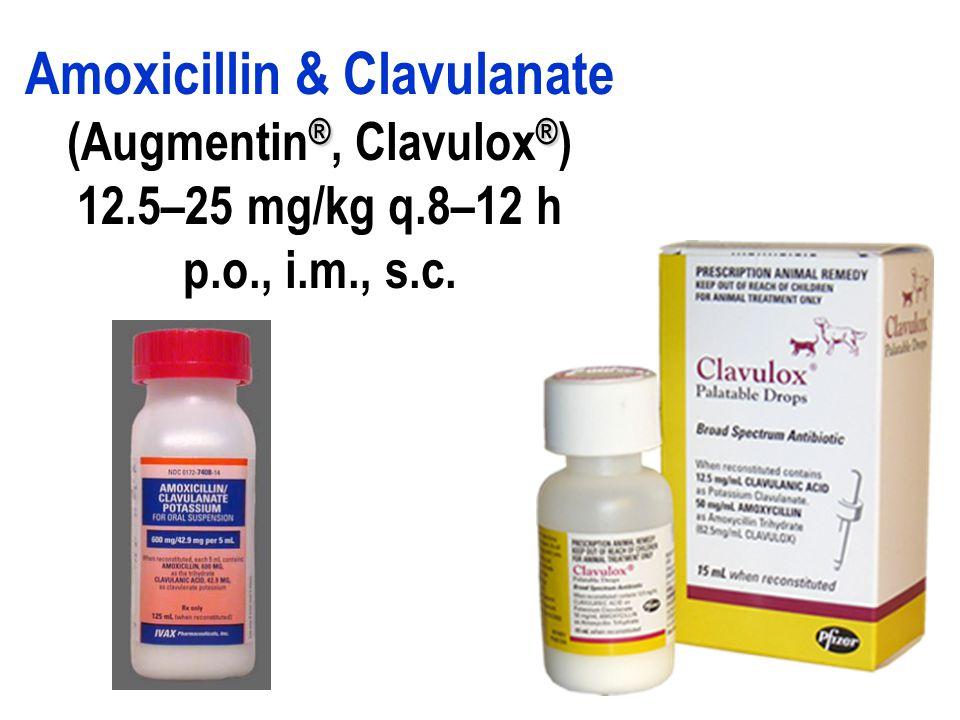 Amoxicillin drops