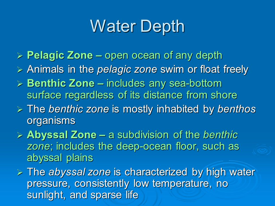 Water Depth Pelagic Zone – open ocean of any depth