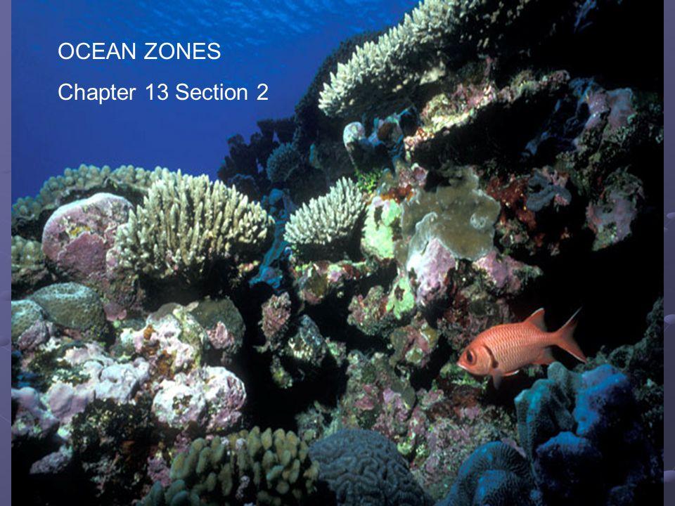 OCEAN ZONES Chapter 13 Section 2 Ocean Zones Chapter 13 Section 3