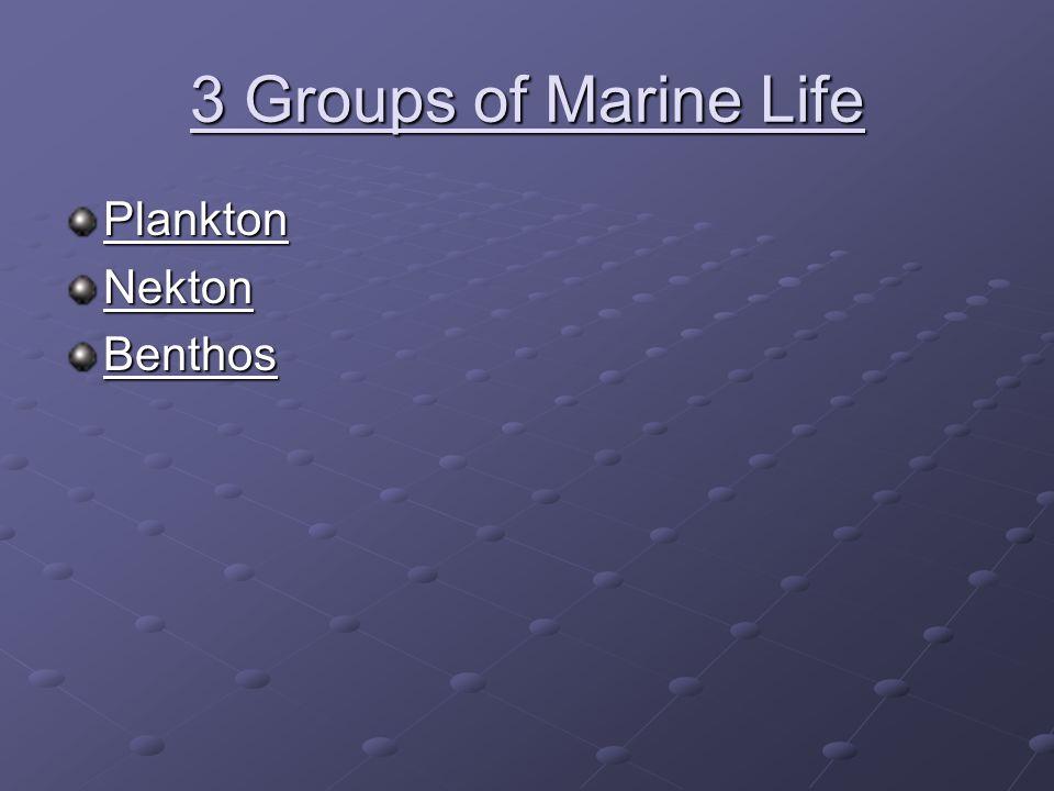 3 Groups of Marine Life Plankton Nekton Benthos