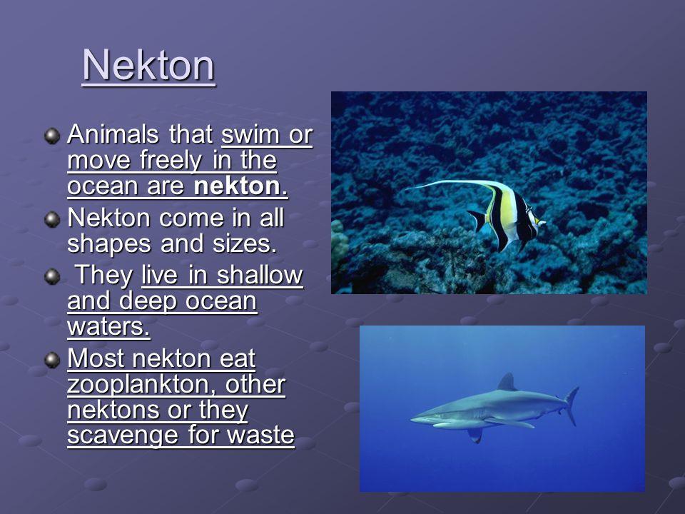Nekton Animals that swim or move freely in the ocean are nekton.