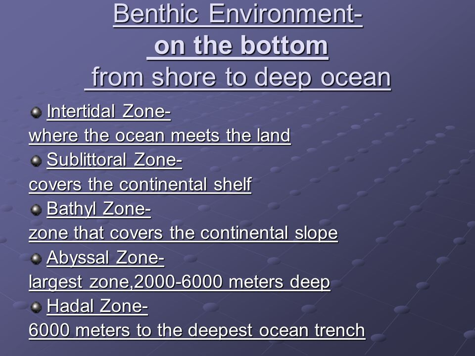 Benthic Environment- on the bottom from shore to deep ocean