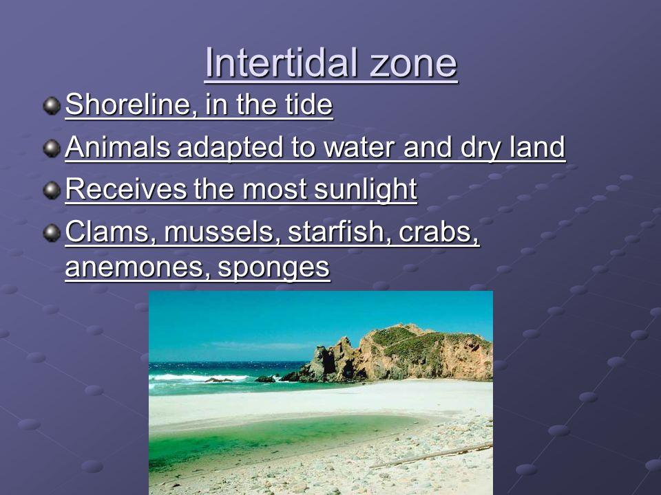 Intertidal zone Shoreline, in the tide