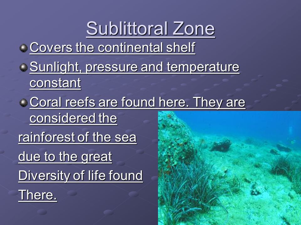 Sublittoral Zone Covers the continental shelf
