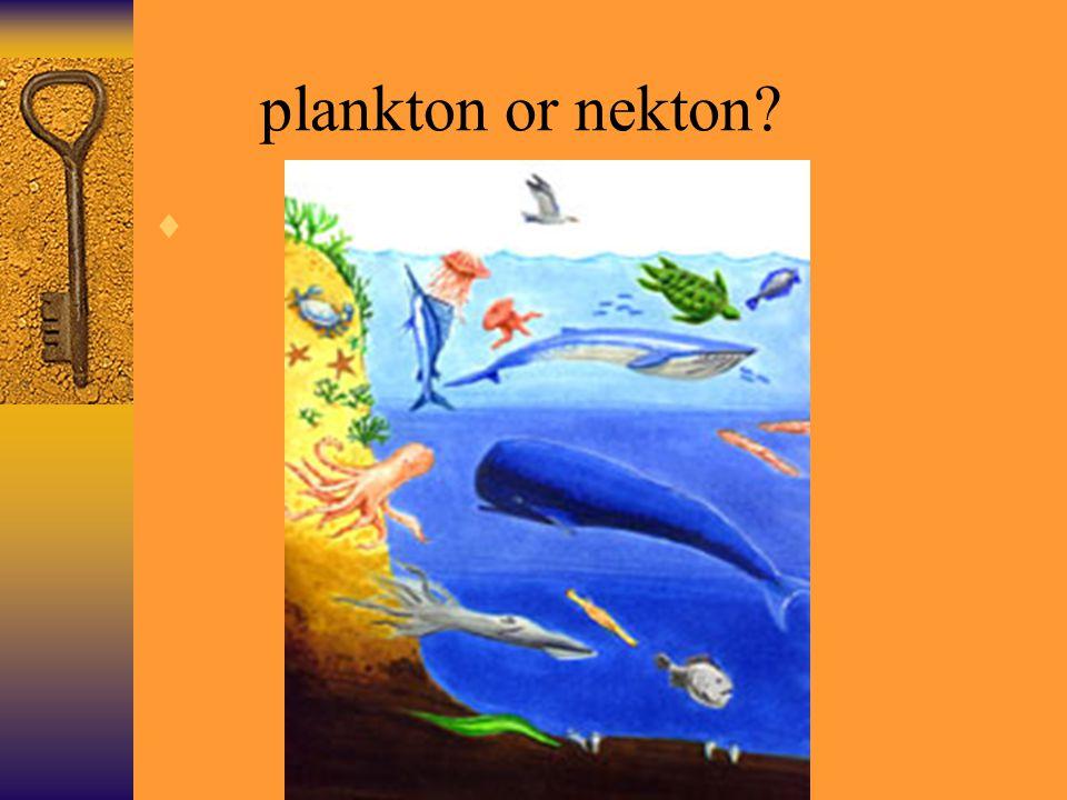 Benthos nekton plankto...