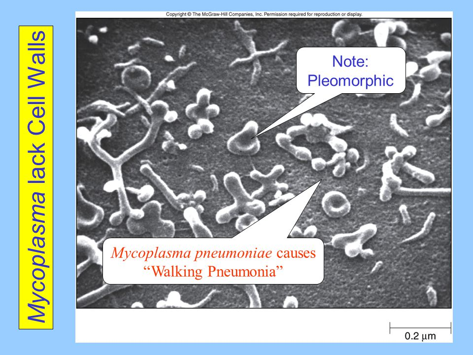 Chapter 3 Microscopy And Cell Structure Ppt Video