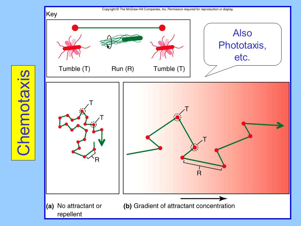 Also Phototaxis, etc. Chemotaxis