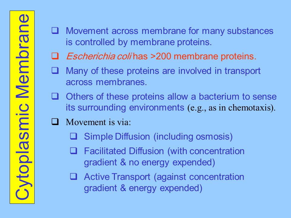 Movement across membrane for many substances is controlled by membrane proteins.