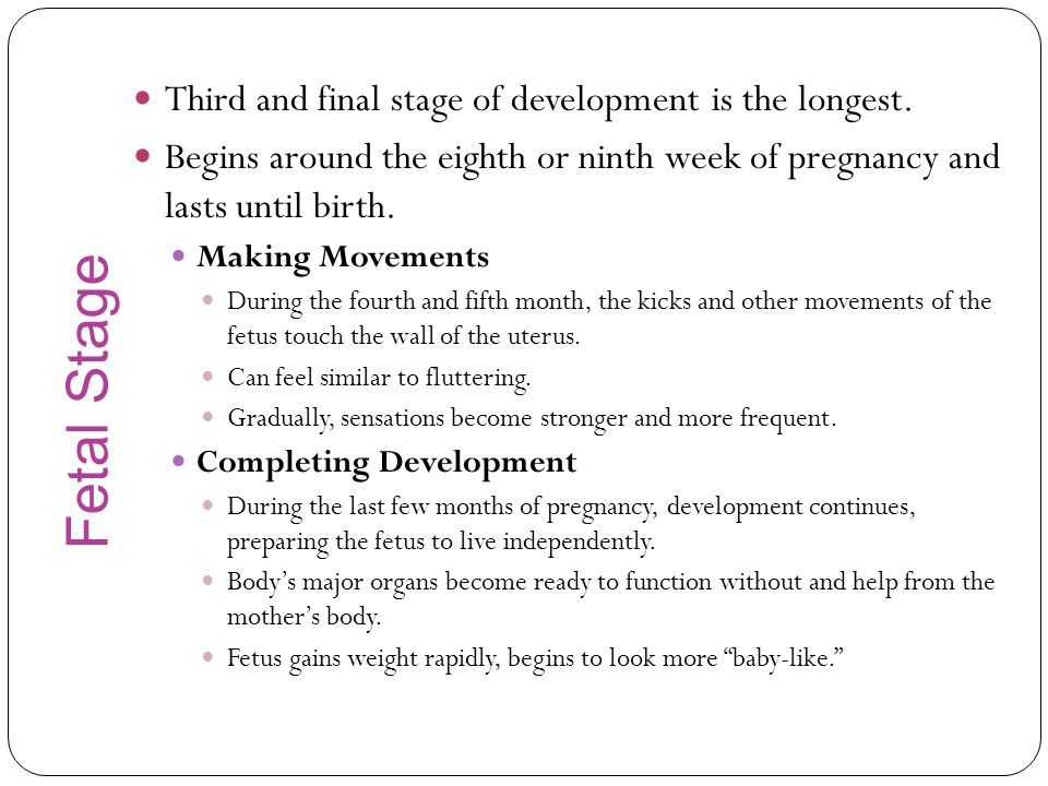 Fetal Stage Third and final stage of development is the longest.