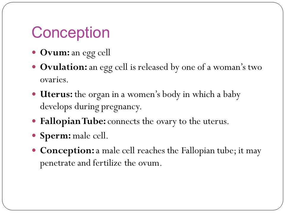 Conception Ovum: an egg cell