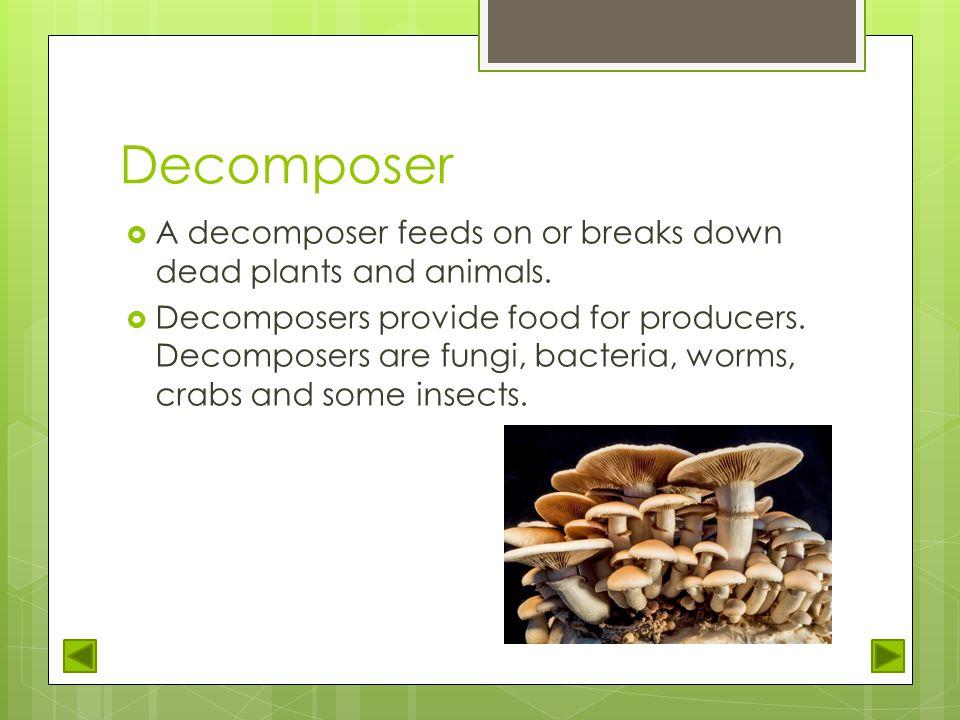 Decomposers animals list