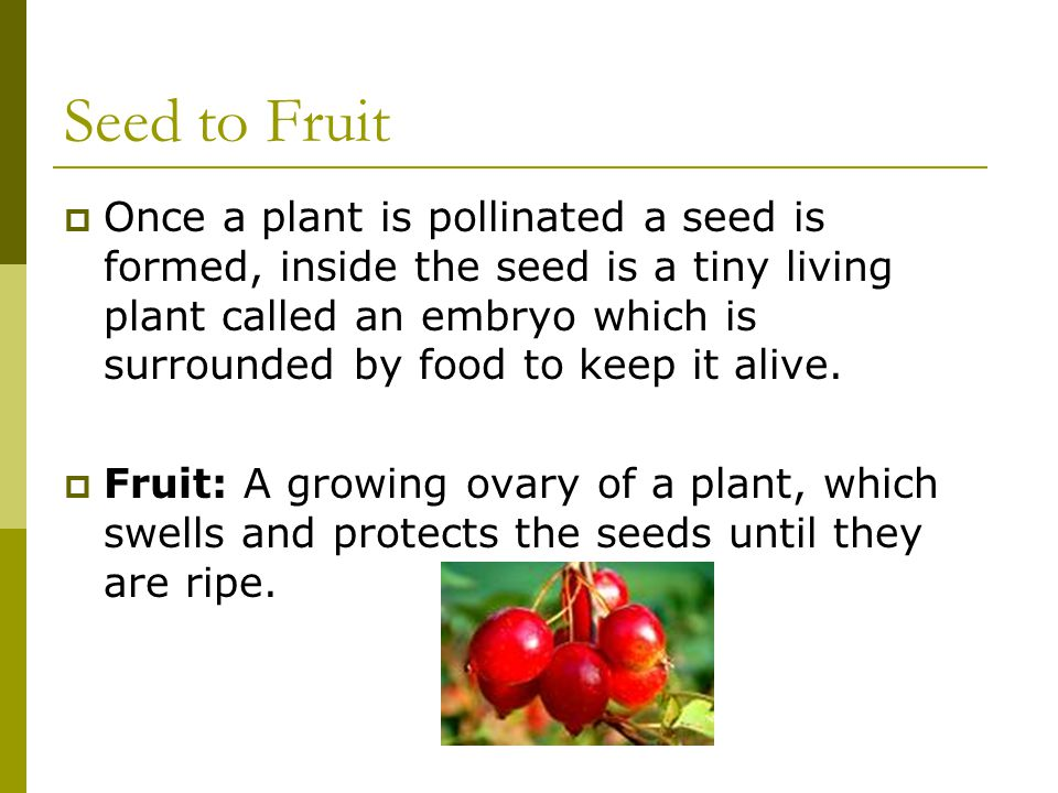 Unit 2 Plants For Food And Fibre Ppt Download