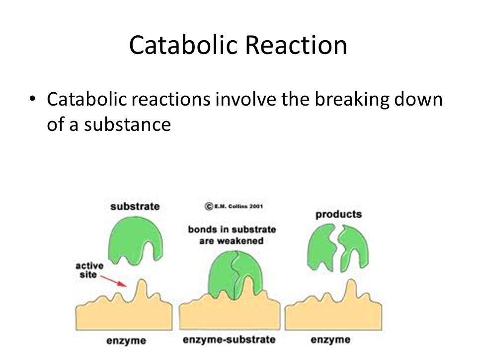 define anabolic effect