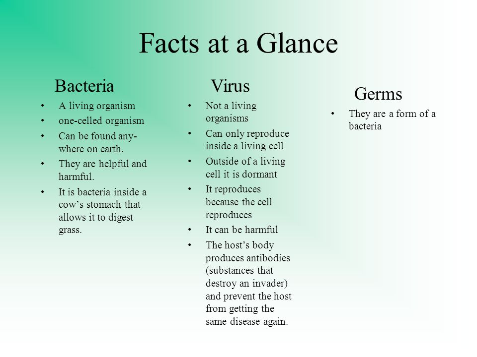 Facts at a Glance Bacteria Virus Germs A living organism