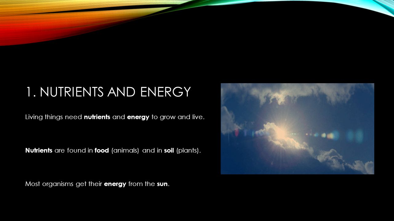 Basic needs of living things ppt download for Living things found in soil