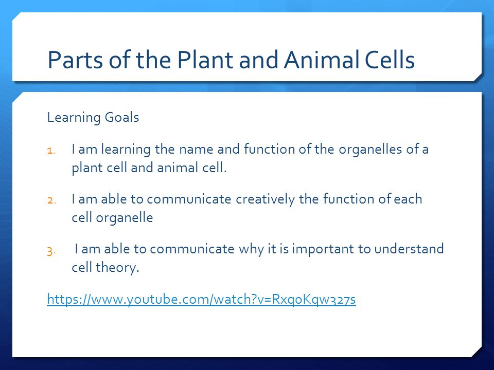 Parts of the plant and animal cells ppt video online download parts of the plant and animal cells ccuart Gallery