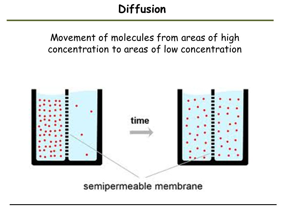 Diffusion Movement of molecules from areas of high concentration to areas of low concentration. Student Misconceptions and Concerns.