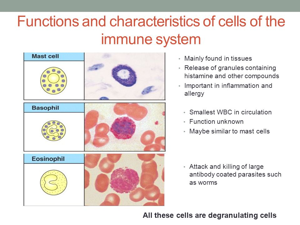 the features of the immune system Do you know what your immune system does for you and what you can do to  help it webmd shares the facts so you can be as healthy as.