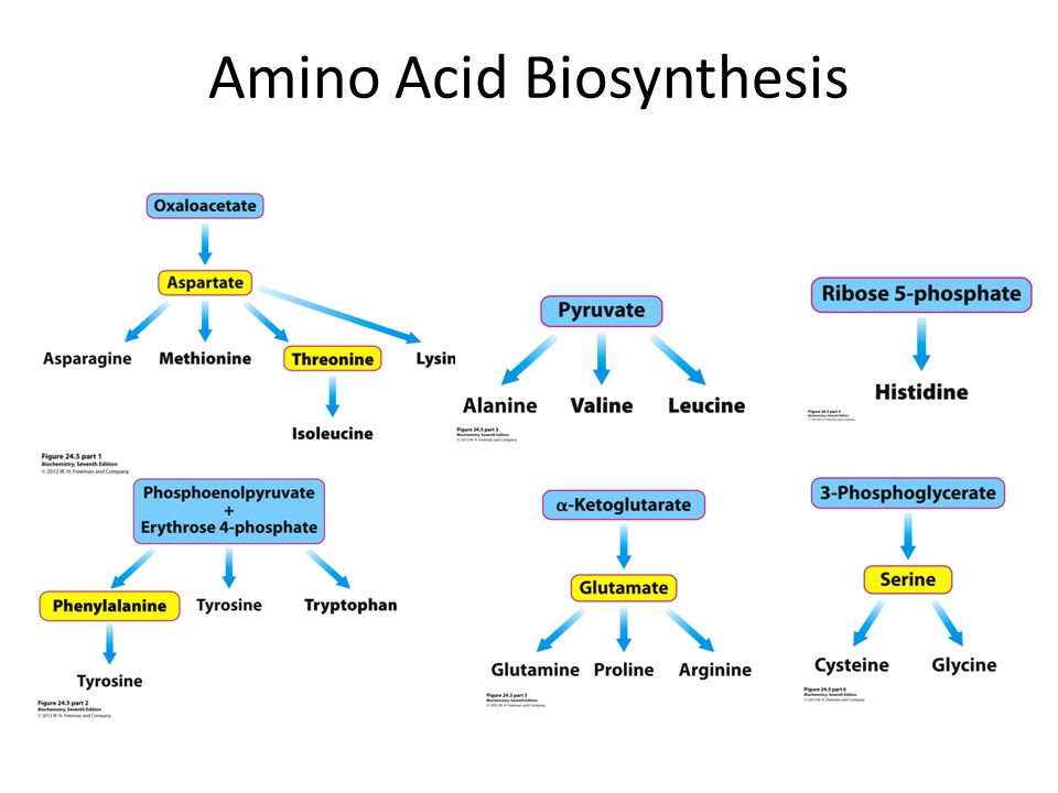 Amino acid synthesis