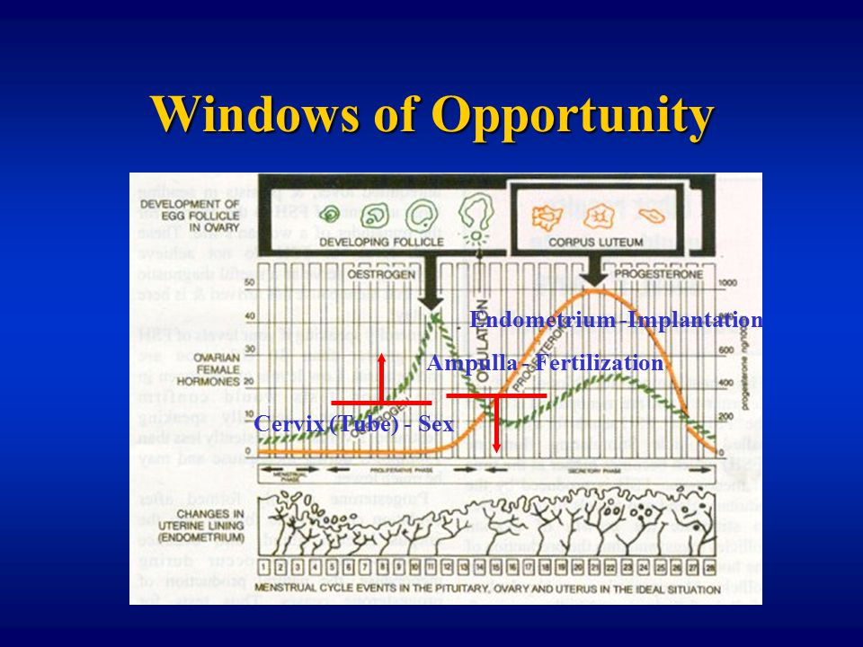 Babies without a test tube dan c martin m d ppt video for Window of opportunity