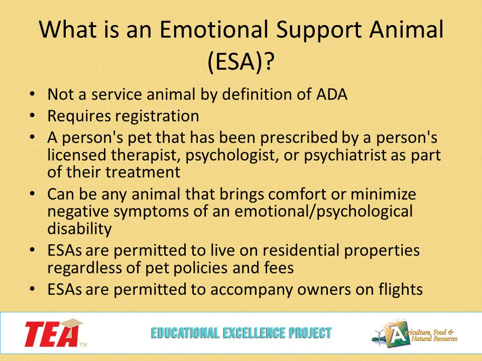 Small Animal Management 130 4 C 1e Ppt Video Online