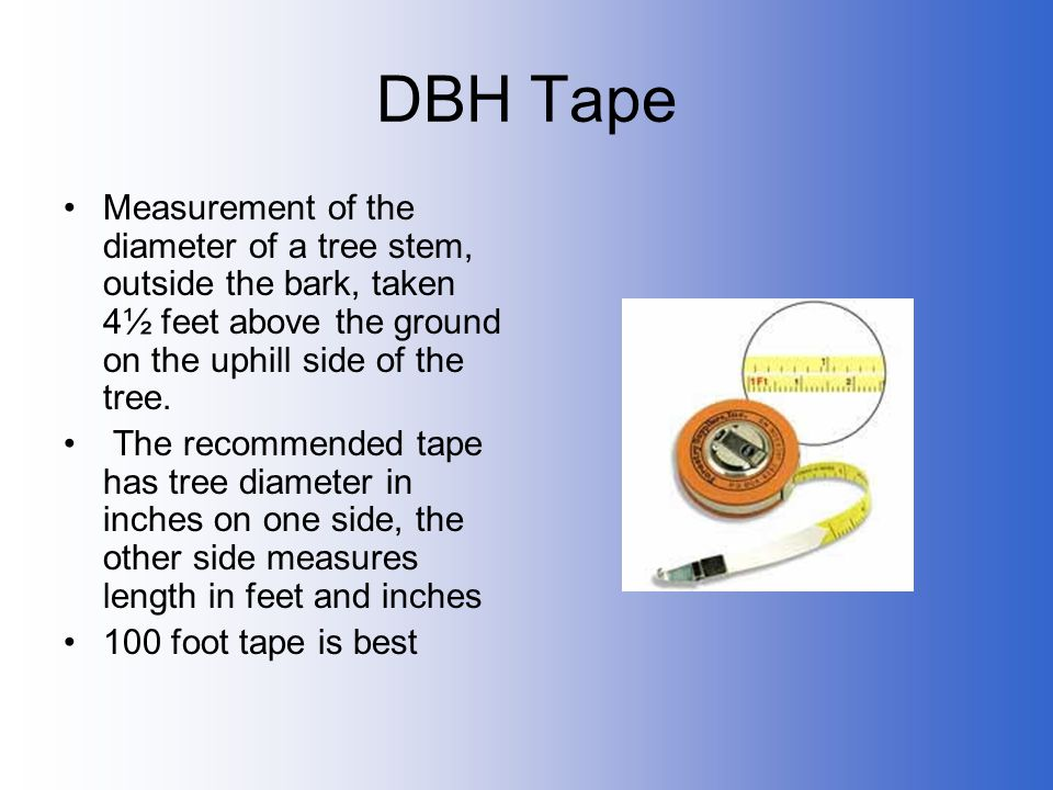 DBH Tape Measurement of the diameter of a tree stem, outside the bark, taken 4½ feet above the ground on the uphill side of the tree.