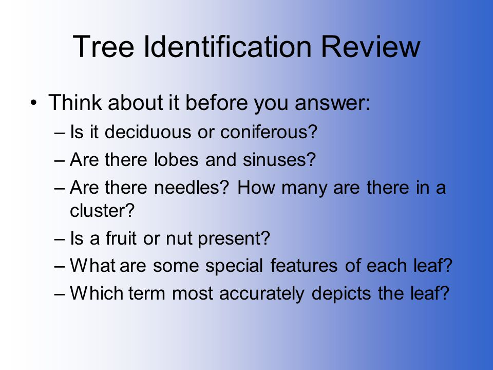 Tree Identification Review