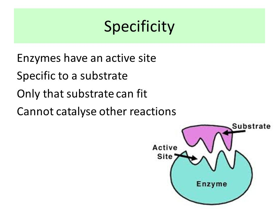 Specificity Enzymes have an active site Specific to a substrate Only that substrate can fit Cannot catalyse other reactions