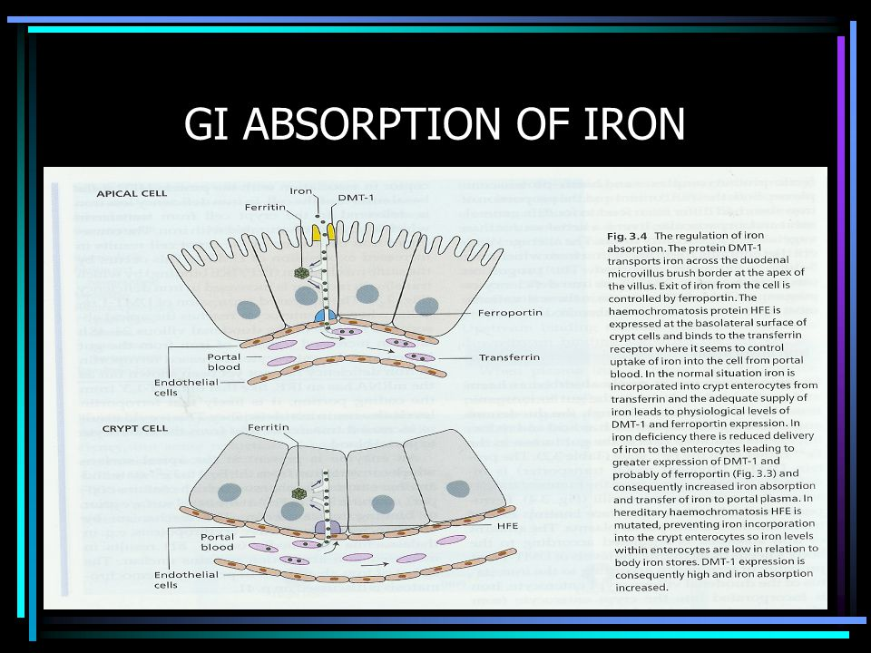 GI ABSORPTION OF IRON