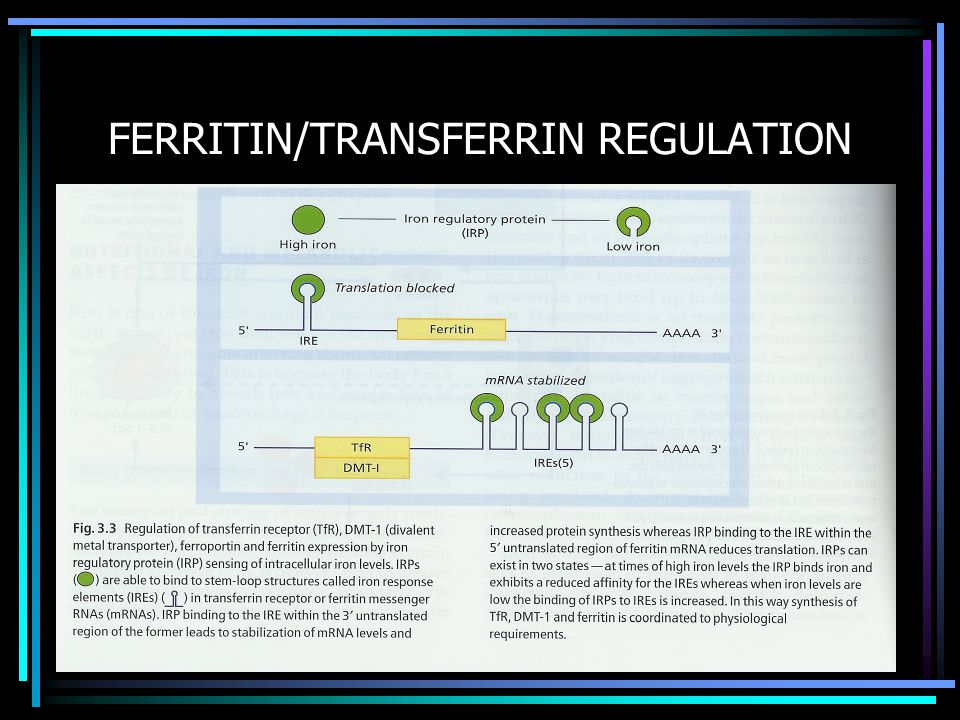 FERRITIN/TRANSFERRIN REGULATION
