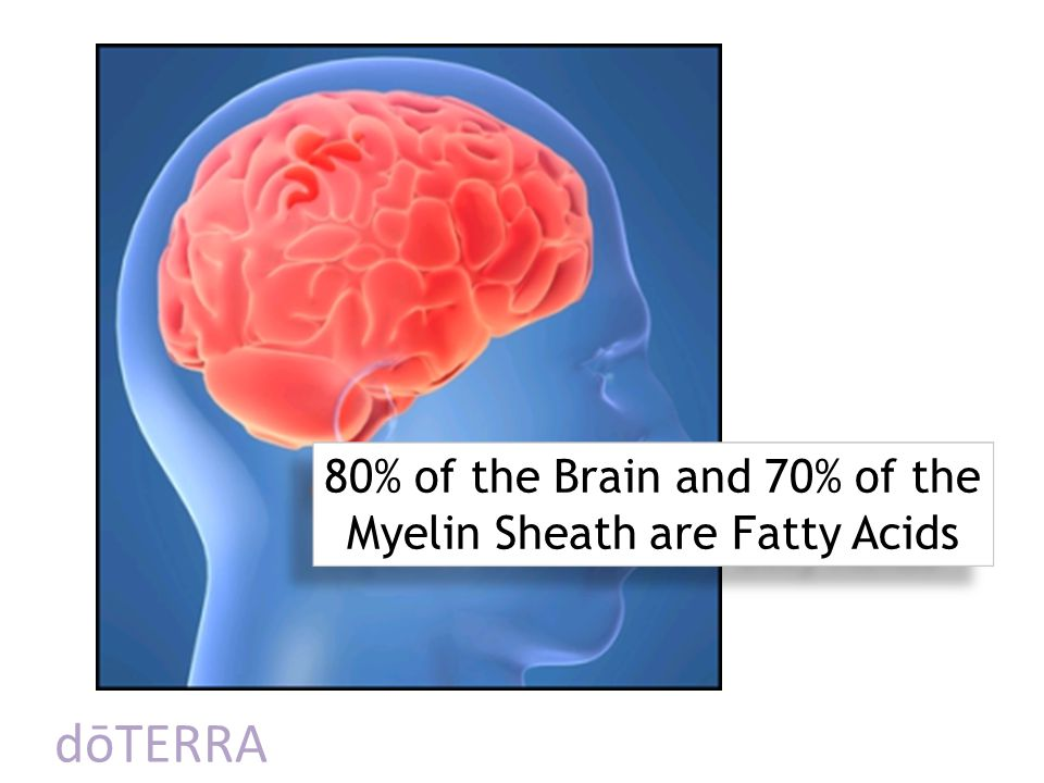 80% of the Brain and 70% of the Myelin Sheath are Fatty Acids