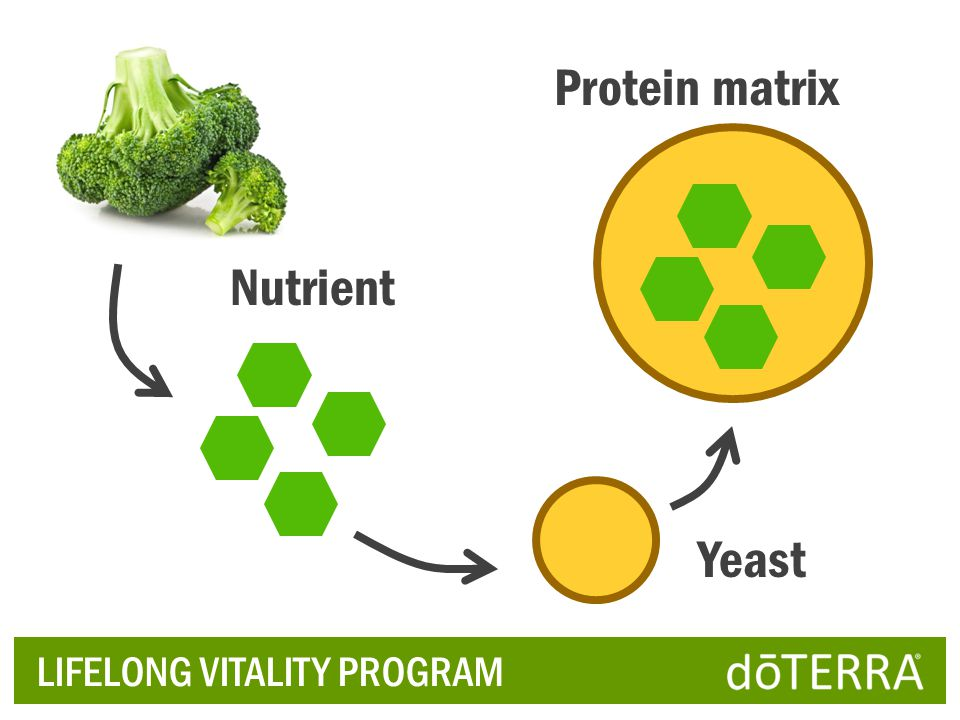 Protein matrix Nutrient Yeast LIFELONG VITALITY PROGRAM