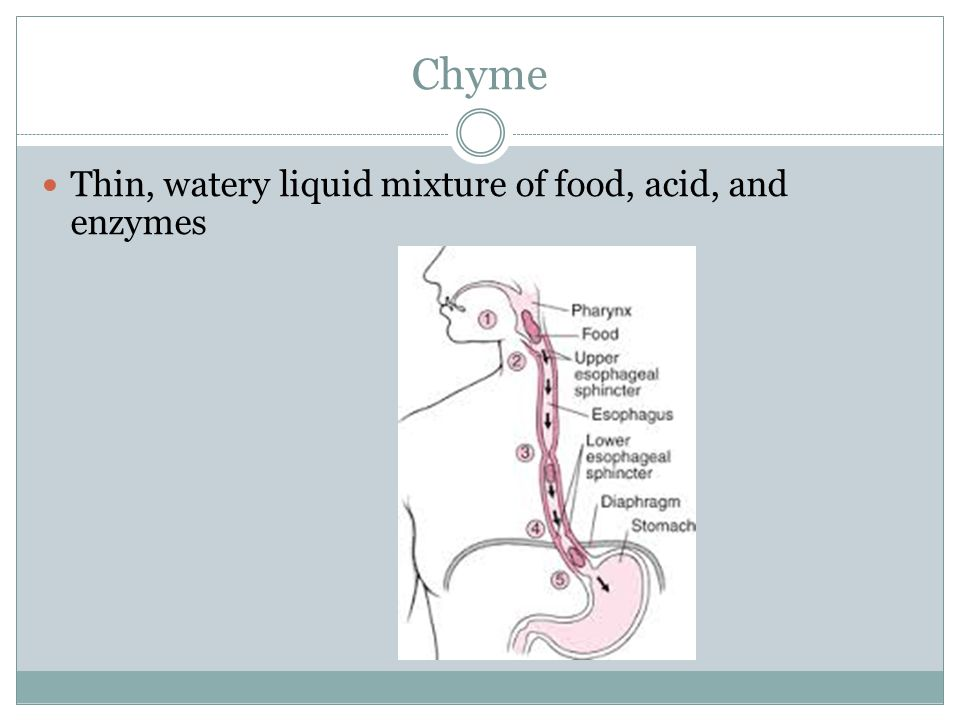Chyme Thin, watery liquid mixture of food, acid, and enzymes
