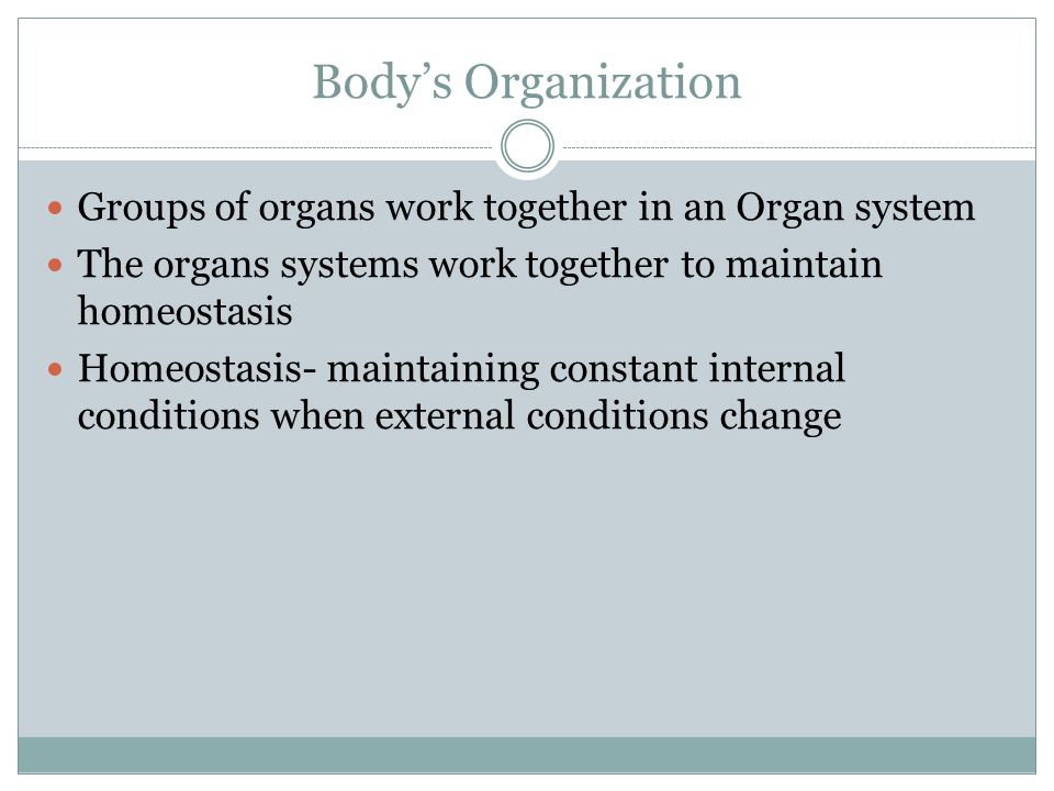 Body's Organization Groups of organs work together in an Organ system