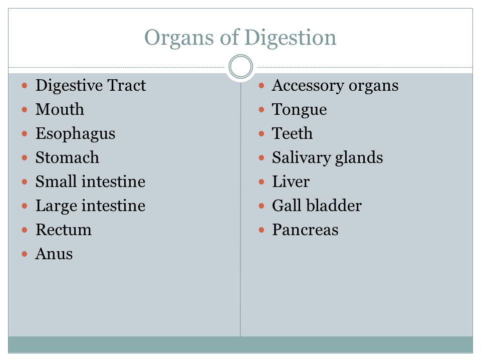 Organs of Digestion Digestive Tract Mouth Esophagus Stomach