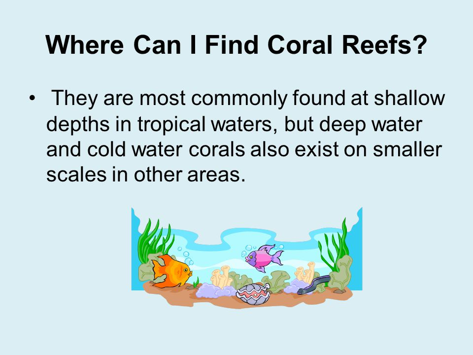 Coral Reefs By Seeley Phillips  Ppt Download. Software Configuration Management Best Practices. Hyundai Buy Back Program Bible Colleges In Ga. Roth Ira Maximum Contributions. Average Cost Of Long Term Care. Cascade Physicians Portland Mba Jobs In Nj. Art Institute Sacramento Corporate Tax Lawyer. Employment Agencies In Memphis Tn. Outsourcing Payroll Services