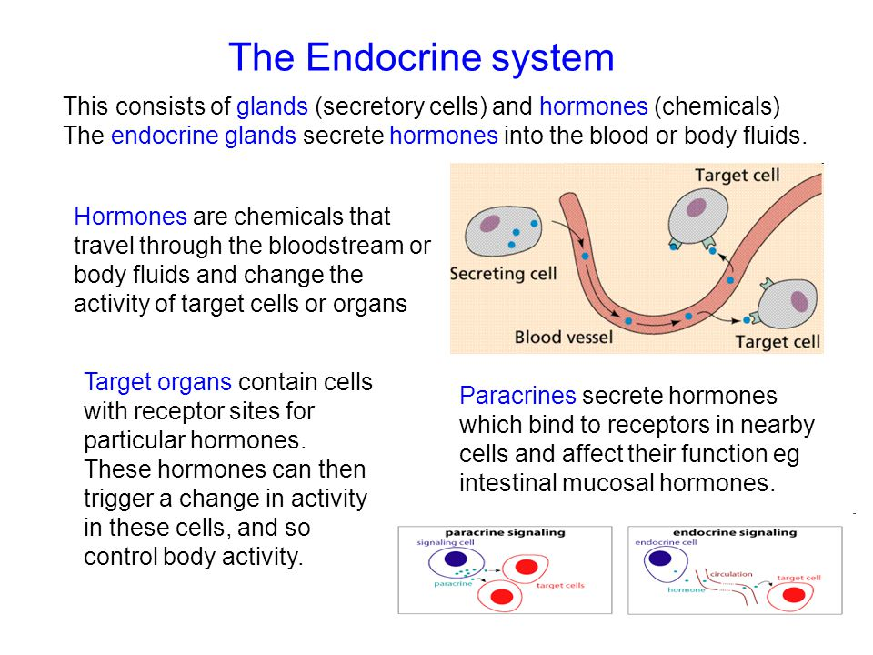 The Endocrine system This consists of glands (secretory cells) and hormones (chemicals)