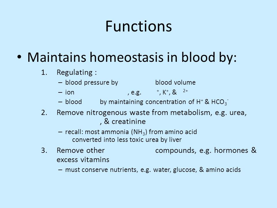 Functions Maintains homeostasis in blood by: Regulating :