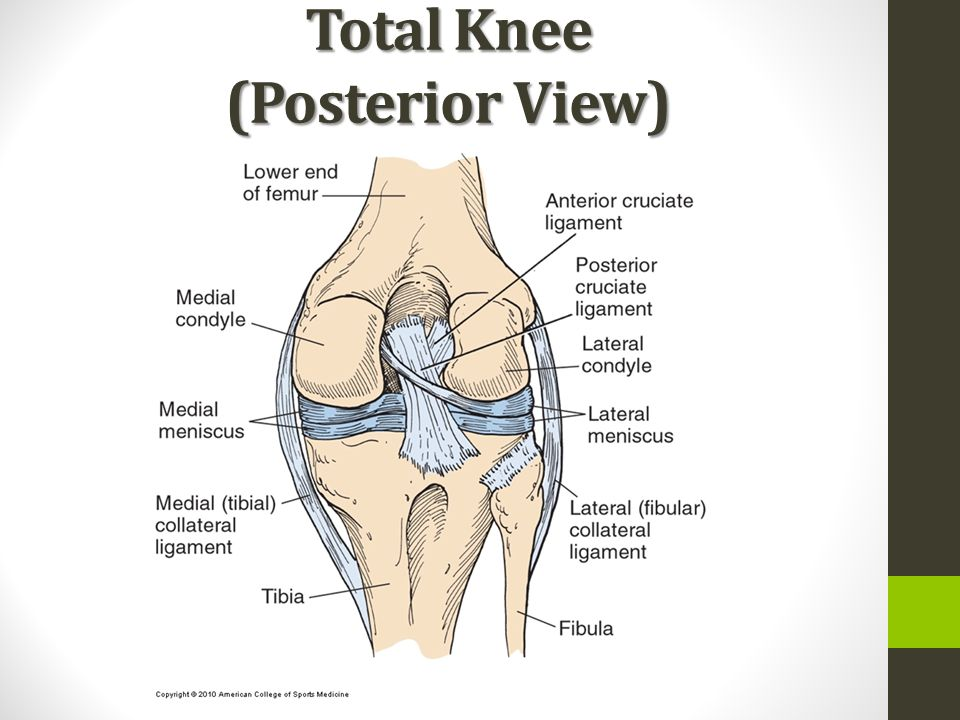 Anatomy of posterior knee 2328793 - follow4more.info
